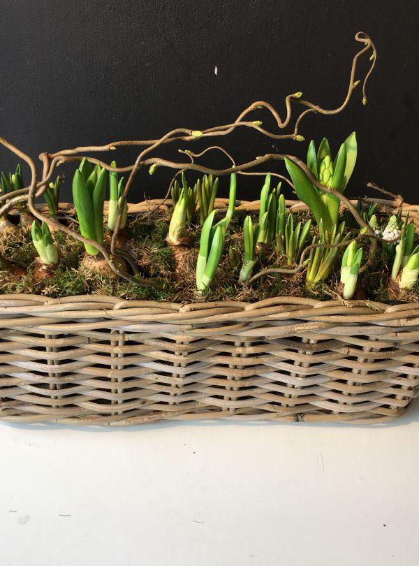 spring bulb trough